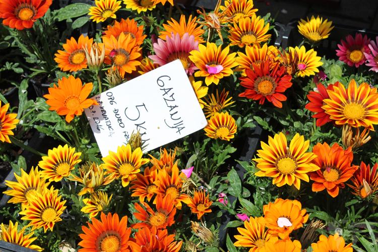 Marché au fleurs à Zagreb