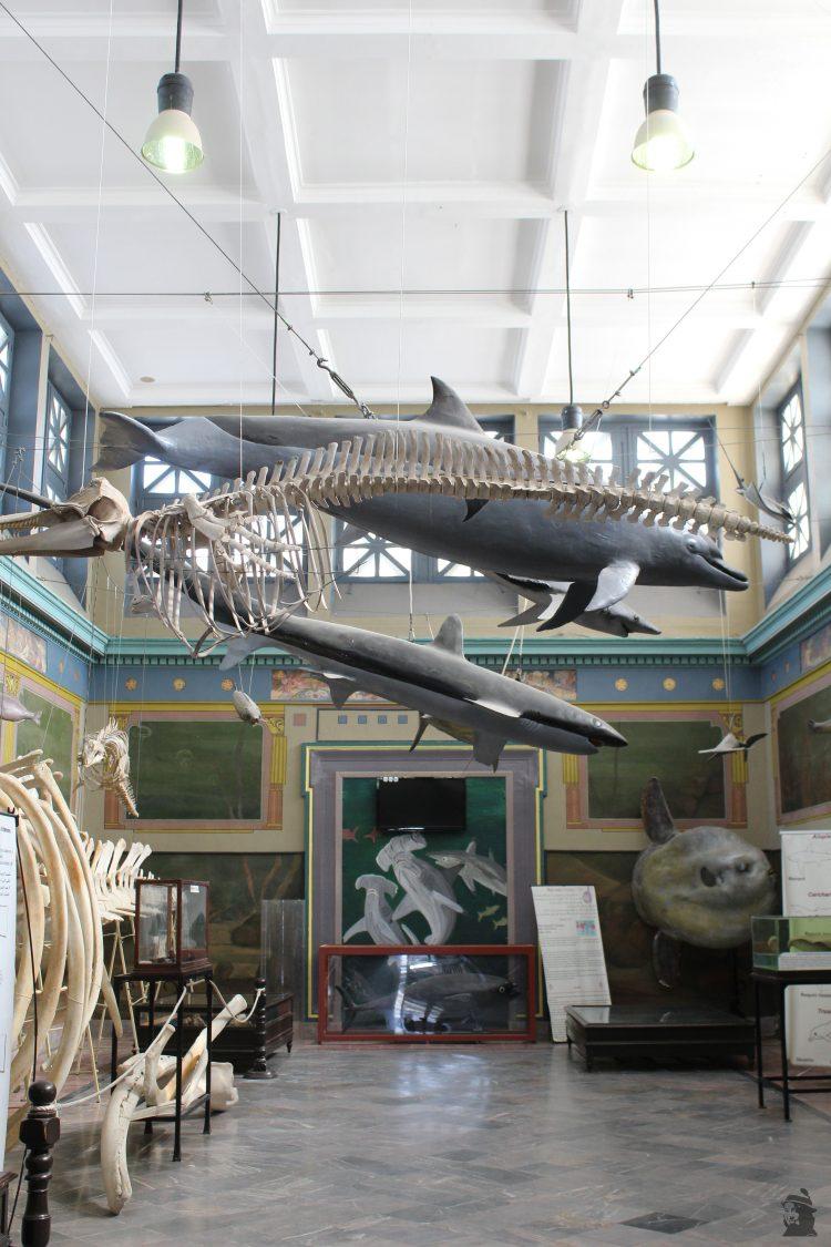 Musée Océanographique Dar El Hout Carthage Touristissimo