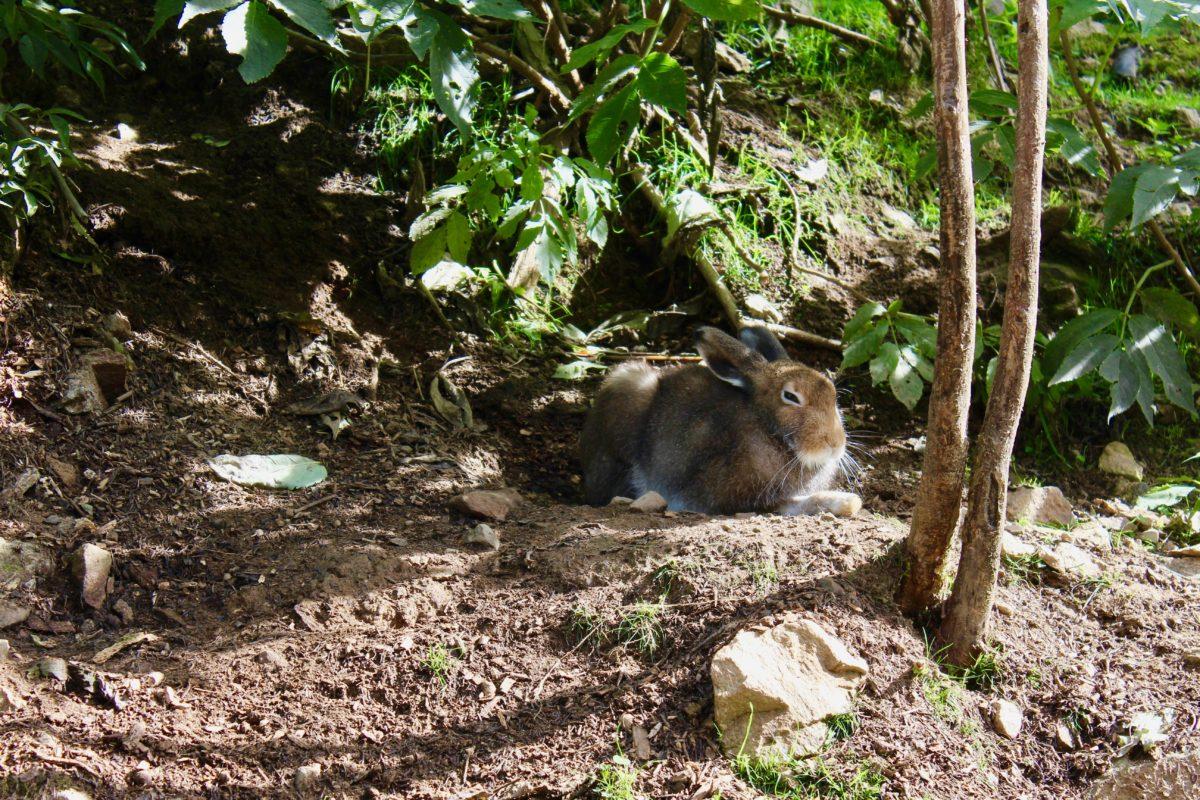 Un lièvre la ferme parc Alpha